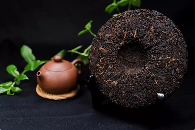 为什么古树茶比较耐泡